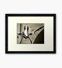 Bones on the Wing Framed Print