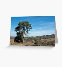 Ashdown Forest Greeting Card