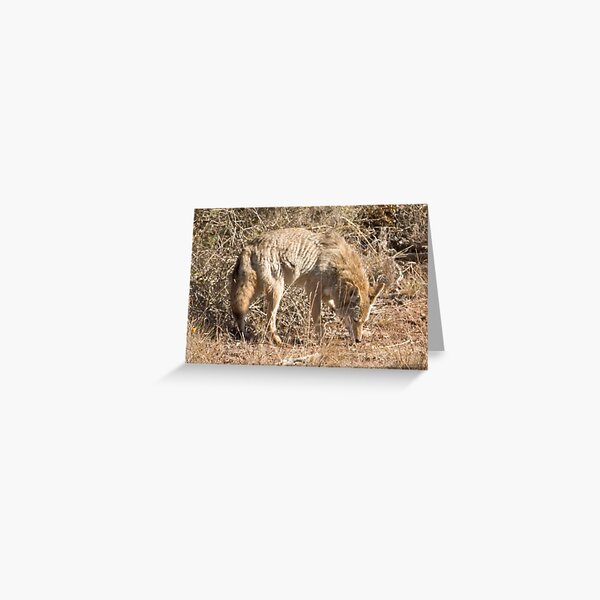 Mr Coyote sniffs a sniff Greeting Card