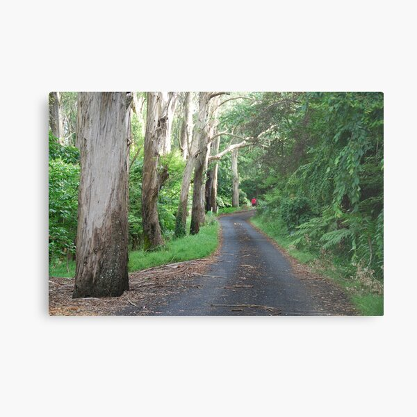 QUEENS  AVENUE,  MOUNT  WILSON,  NSW. Metal Print