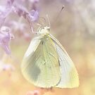 Cabbage White Butterfly by Elaine Manley