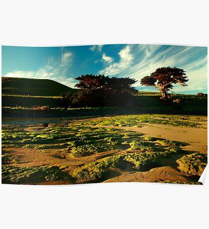 godfreys beach, stanley. northwest tasmania Poster