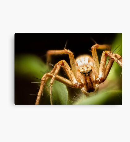 Lynx Spider Stack Canvas Print