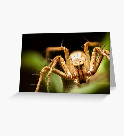 Lynx Spider Stack Greeting Card