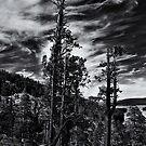 Lake Tahoe by Jeffrey  Sinnock