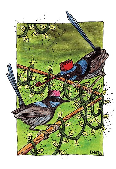 Fairy Wren Christmas Party by Katherine May