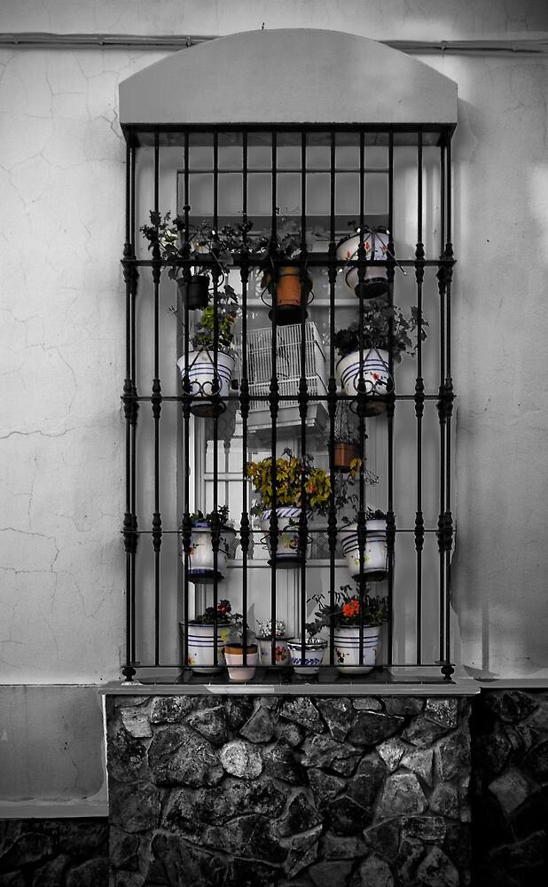 Window by Unai Ileaña