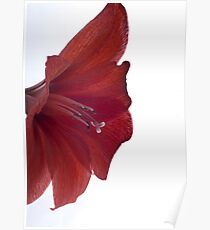 Red Flower - Macro Poster