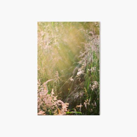 Summer Afternoon in a Meadow Art Board Print