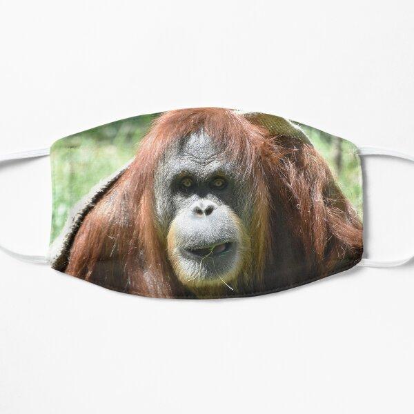 Sumatran Orangutan Karen at the San Diego Zoo Mask