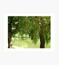 Willow trees Art Print