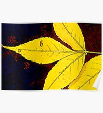 Fallen Leaf Poster