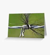 Hair on a Wire Greeting Card
