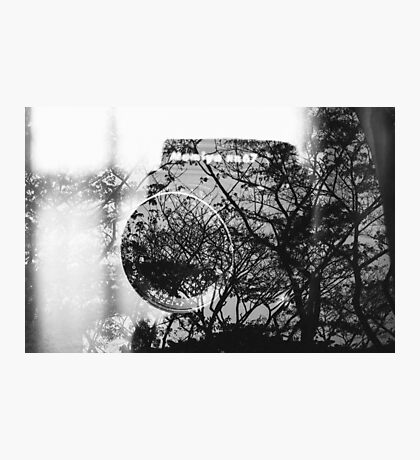 Camera and trees double exposure Photographic Print