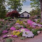 One of my gardens in Spring time by Penny Fawver