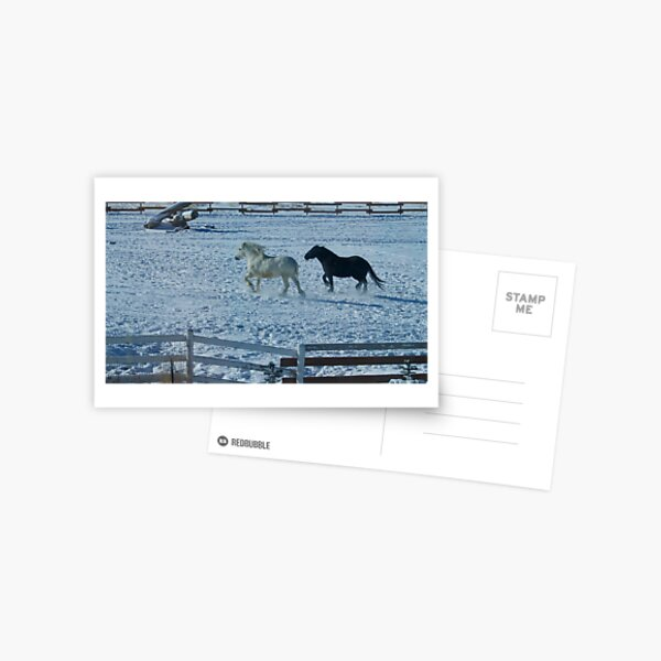 Snow Angels Postcard