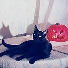 The Black Cat by Brett Manning