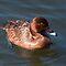 Water Bird - Members Subject Challenge