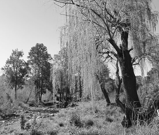 Black & White Willow by StormSageRain