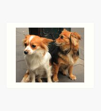 Two Cute Dogs Art Print