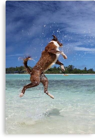 MCC It's a dog's life! by Mossman  Community Centre