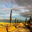 Country road, Tuscany by Tamara Travers