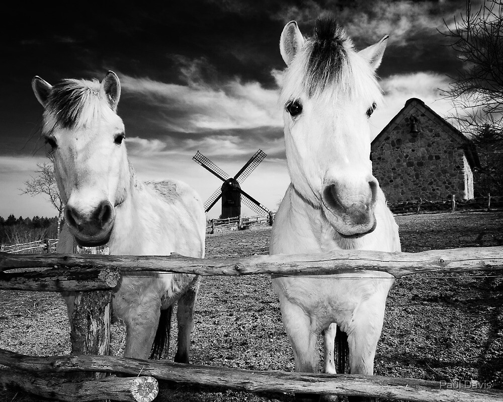 Horses at Hjede Hede by Paul Davis