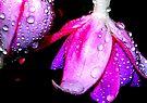 Brilliant Beauty by Tori Snow
