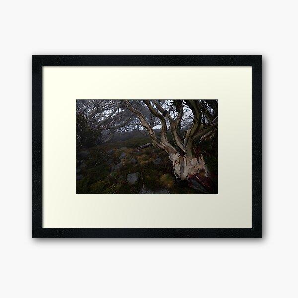 Charlotte Pass - Snow gums view 01 Framed Art Print