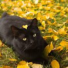Cat Under Autumn Birch by Jordan Selha