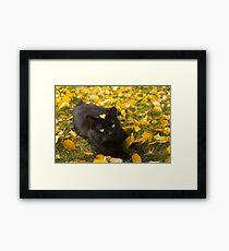 Cat Under Autumn Birch Framed Print