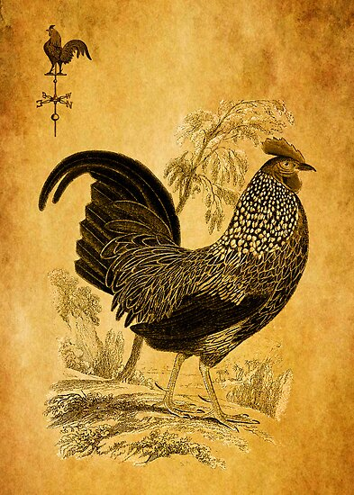 Thanksgiving Rooster by Sarah Vernon