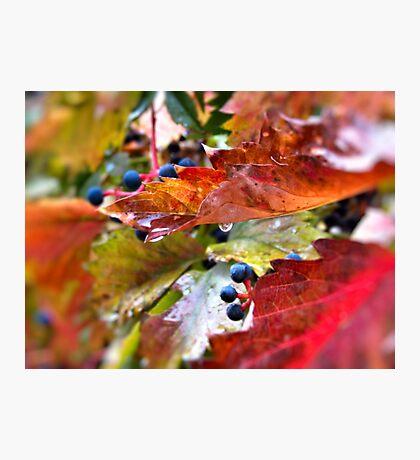 Pleasant Rainy Day Photographic Print