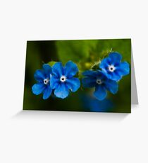 Salix Eugenes Greeting Card
