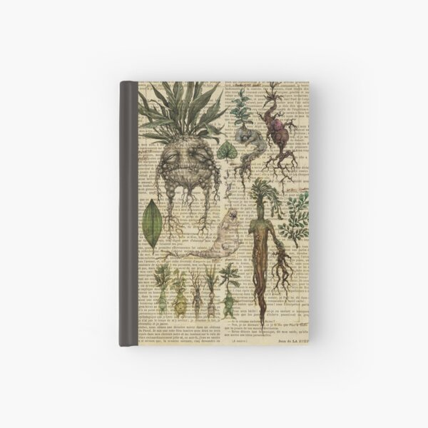 Botanical print, on old book page - Mandragora Hardcover Journal