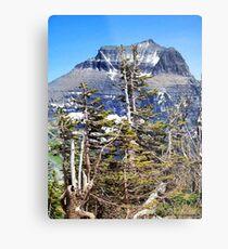 Windblown (Glacier National Park) Metal Print