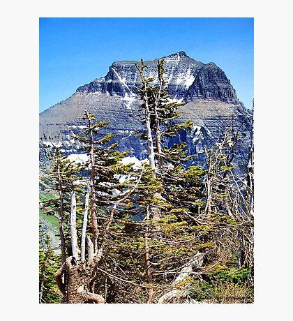 Windblown (Glacier National Park) Photographic Print