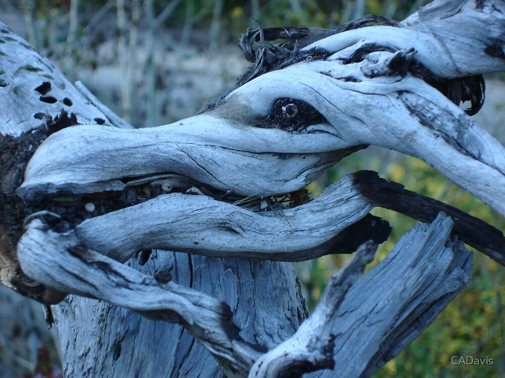 Wooden Horse by CADavis
