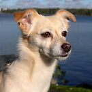 Princess - The most beautiful dog in the world by KanaShow