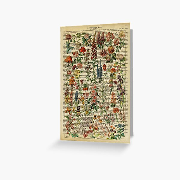 Botanical print, on old book page - garden flowers Greeting Card
