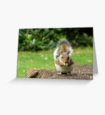 Nibbles Greeting Card