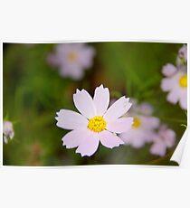 Light Pink Wildflowers Poster
