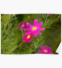 Dark Pink Wildflowers Poster