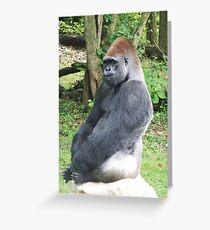 Male Silverback Lowland Gorilla at Kansas City Zoo 2 Greeting Card