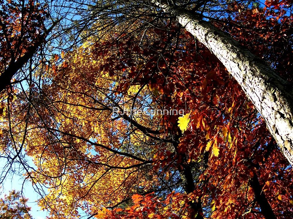 Oxford, MI   Autumn 6 by RJ Balde