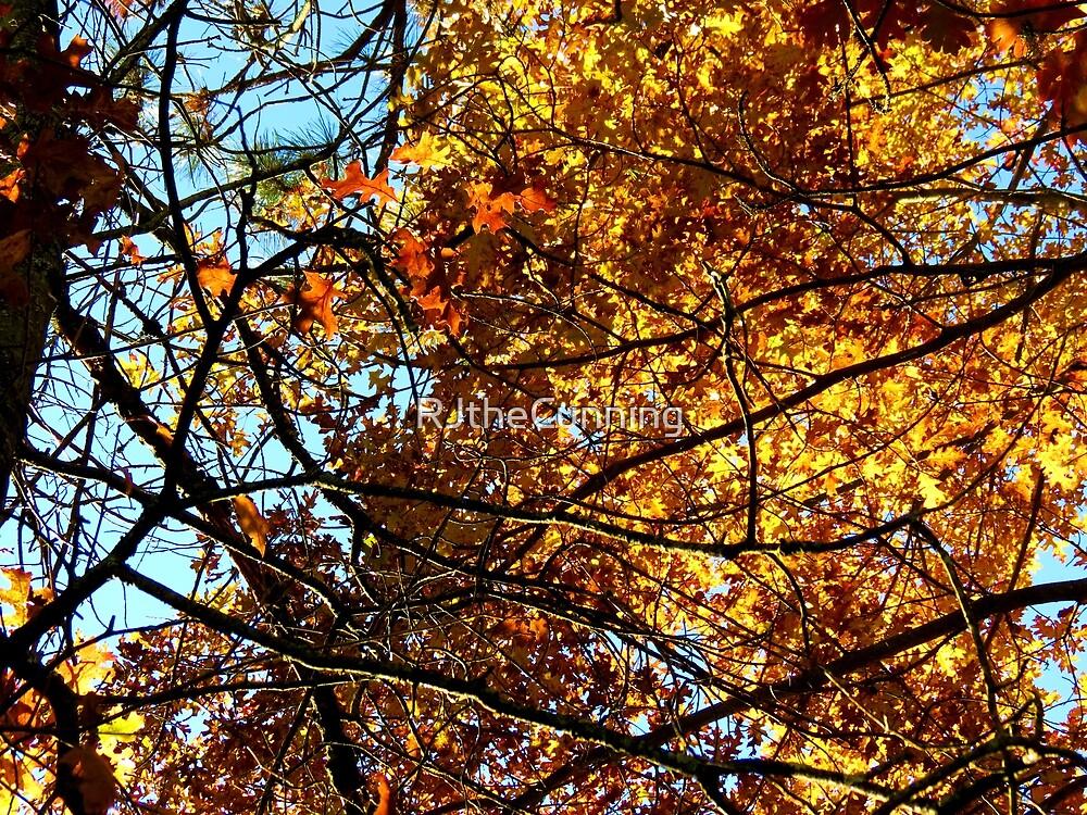 Oxford, MI | Autumn 7 by RJ Balde
