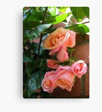 Roses Sleeping in the Sunshine Canvas Print