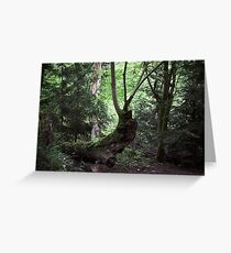 Fleeting greeting cards redbubble she tarried at the tree for the count of three greeting card m4hsunfo