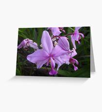 FNQ bloom Greeting Card