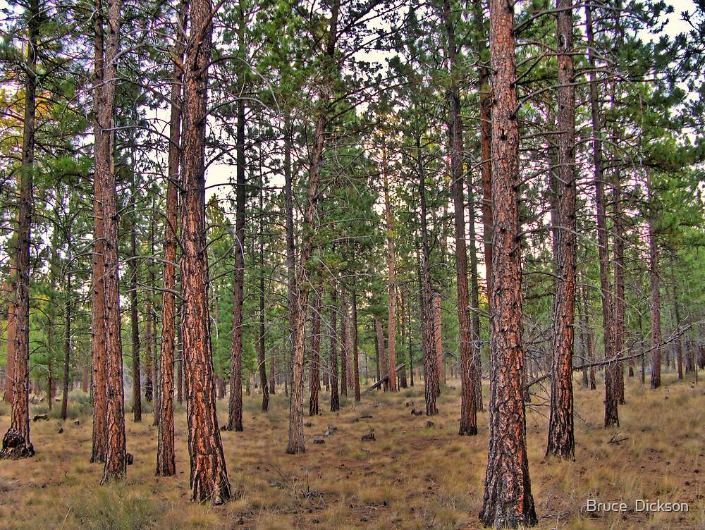 ponderosa trail by Bruce  Dickson